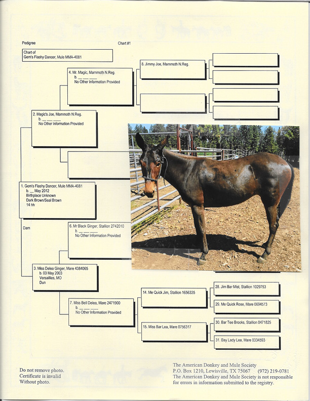 Gem's Flashy Dancer Pedigree