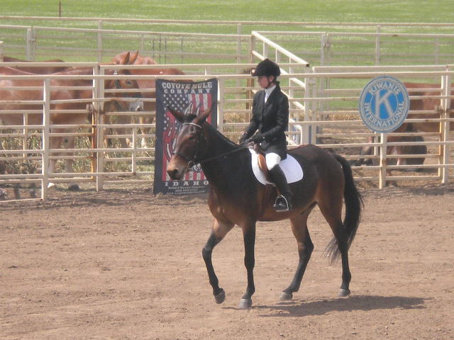 Slick excels under English saddle
